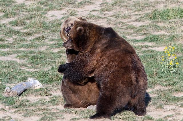 Meveď grizly.jpg
