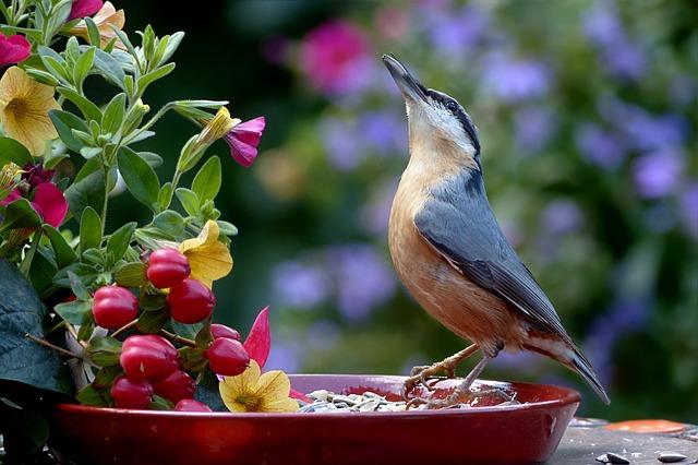 vták pri kŕmidle.jpg